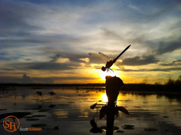Landscape photography of a dragonfly at sunset over Lake Jackson in Tallahassee, shot with an iPhone.