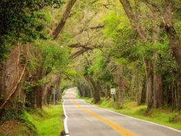 Oak tree limbs stretch out over Miccosukee Road, a beautiful canopy road in Tallahassee, Florida, in the early springtime.