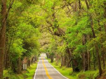 A view down Miccosukee Road in the springtime shows how this canopy road is one of the best scenic drives in Tallahassee, Florida.