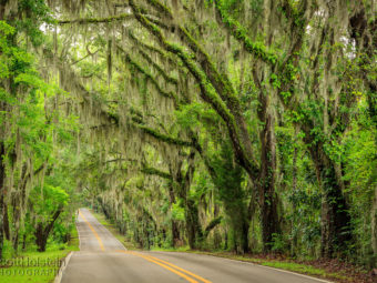 Miller Landing Road, a Florida scenic drive, is a canopy road in Tallahassee that leads to Miller Landing on Lake Jackson.