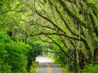 Miller Landing Road is a canopy road in Tallahassee, Florida that leads to Miller Landing on Lake Jackson.
