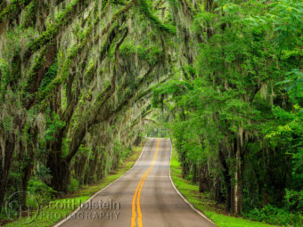 Miller Landing Road is a canopy road in Tallahassee that leads to Miller Landing on Lake Jackson.
