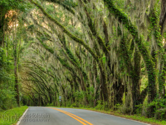 Miller Landing Road is a scenic drive in Tallahassee that leads from Meridian Road to Miller Landing on Lake Jackson.