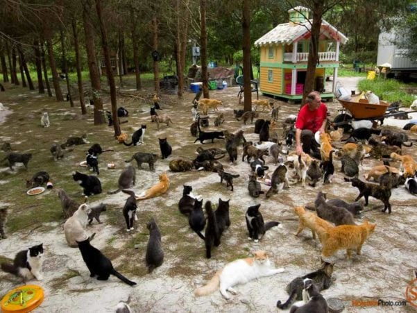 Photo of cat feeding time at Caboodle Ranch in Florida by editorial photographer Scott Holstein.
