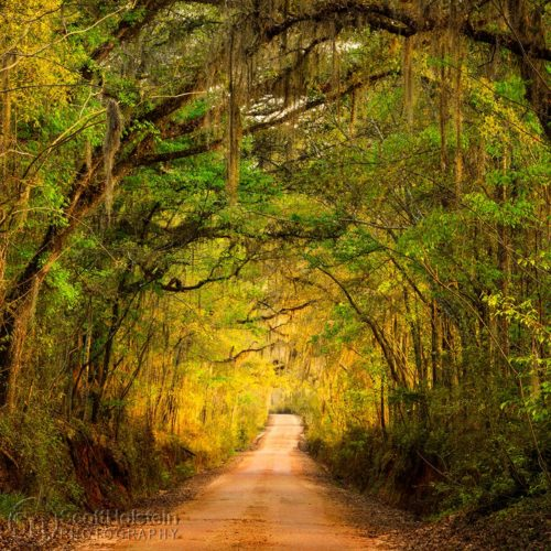 Buy landscape photography of canopy roads, view images of scenic drives down country roads, including Tallahassee canopy roads in Florida.