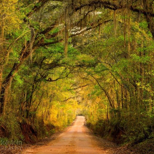 Buy landscape photography of canopy roads, view images of scenic drives down country roads, including canopy roads in Tallahassee, Florida.