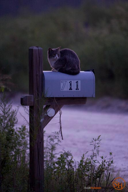 Photo of a cat sitting on a mailbox at dusk by Florida magazine photographer Scott Holstein.