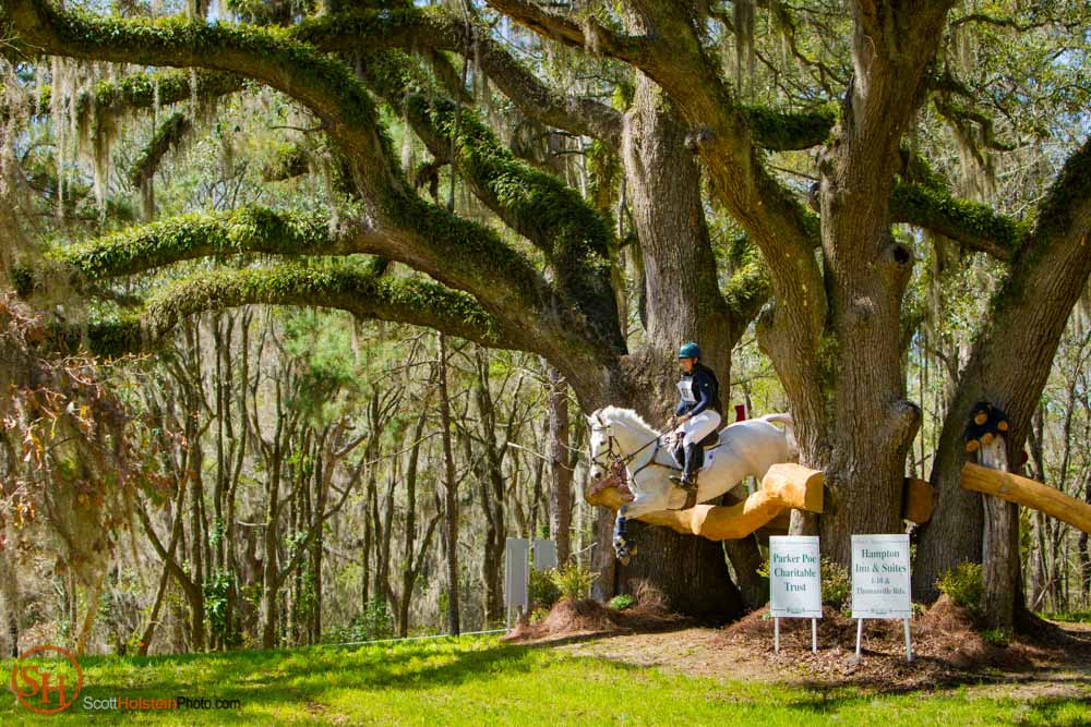 A white horse and rider jump over a fence between beautiful Live Oak trees covered in ferns in Tallahassee, Florida