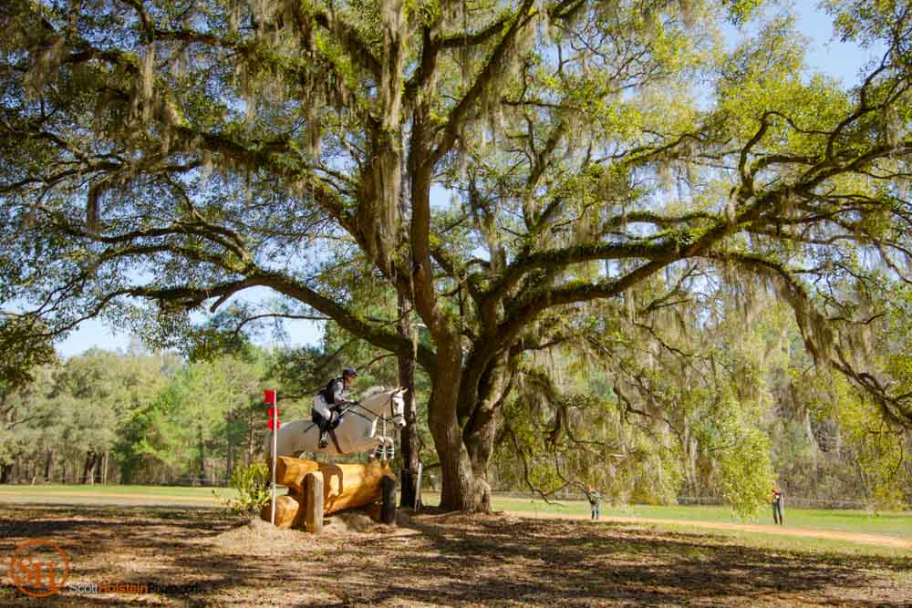 A horse and rider jump a fence beneath an oak tree during Cross Country at Red Hills International Horse Trials.