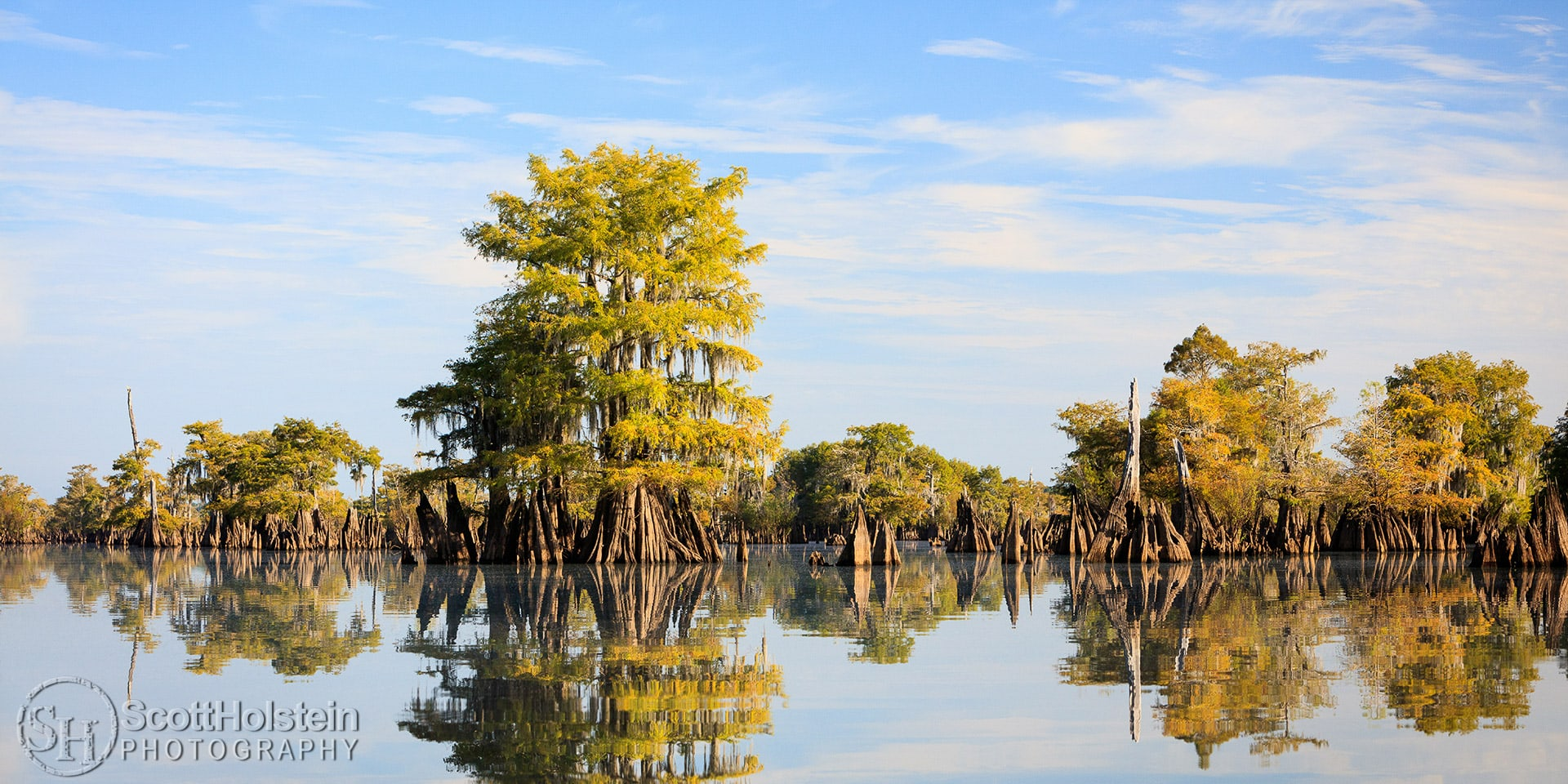 Cypress trees and stumps rise out of the water in Dead Lakes in Wewahitchka, Florida.