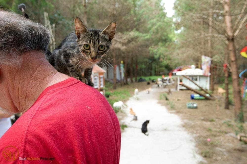 Editorial photography of a young cat riding on Craig Grant's shoulders at Caboodle Ranch in Lee, Florida by Scott Holstein.