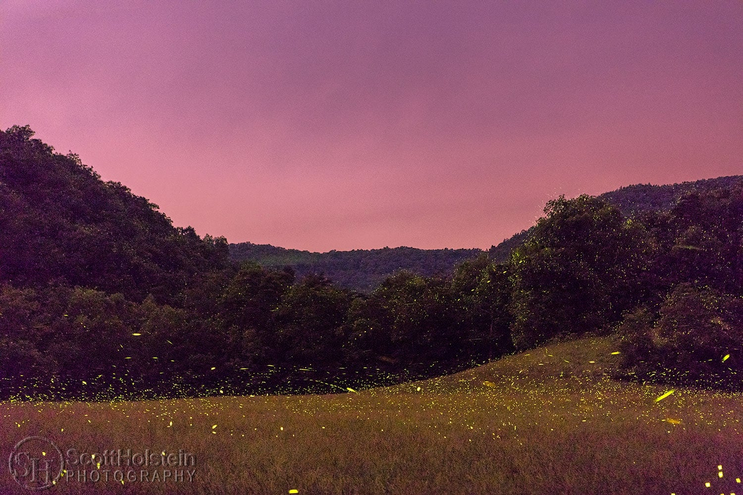 Fireflies in the mountains at sunset.