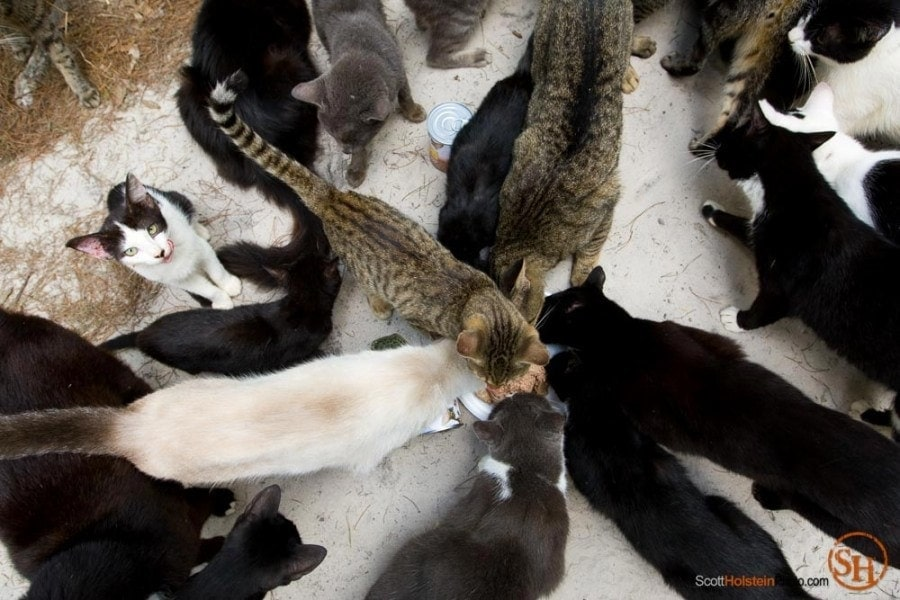 Photography from an above view of cats eating at Caboodle Ranch in Lee, Florida by editorial photographer Scott Holstein.