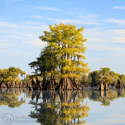 Our Florida Landscape Photography Collection contains images from around the state of Florida, including Tallahassee, the Emerald Coast, the Forgotten Coast, and Venice.