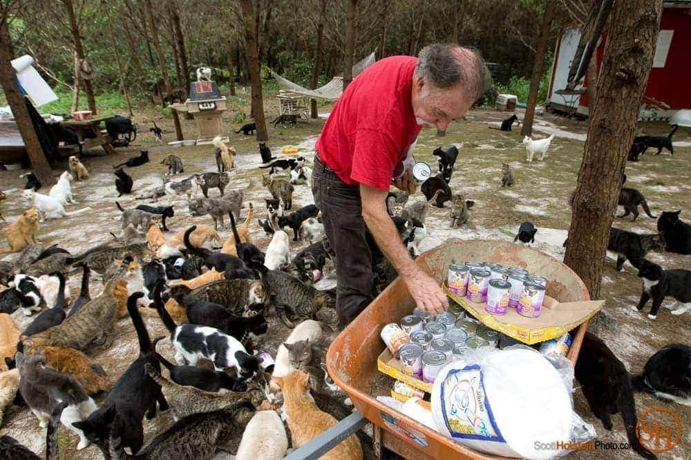 Craig Grant serves up canned food for his hundreds of cats at feeding time at Caboodle Ranch in Lee, Florida.