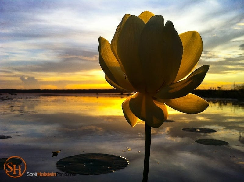 The sun shines behind a water lily at Lake Jackson in Tallahassee in this iPhone photo.