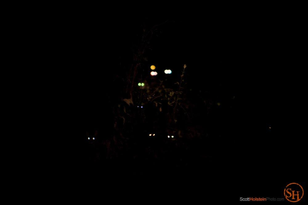 Photo of cats' eyes glowing in the dark at Caboodle Ranch by documentary photographer Scott Holstein.
