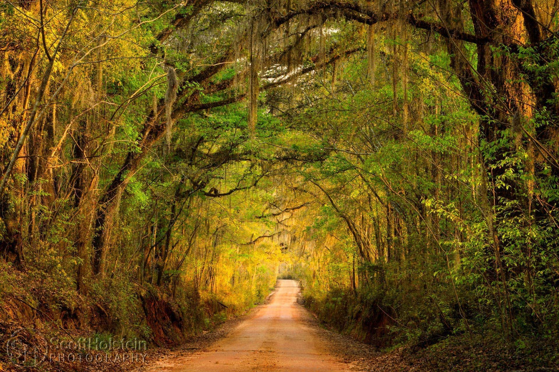 A view down Old Magnolia Road, one of the canopy roads in Tallahassee, at sunset in the early springtime.