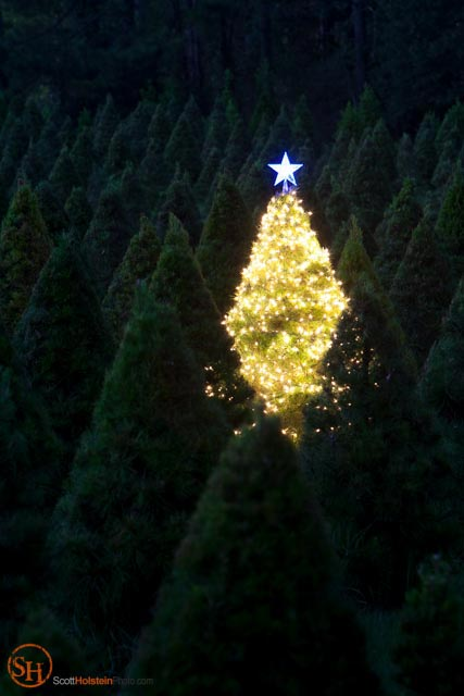 Photo of a single Christmas tree glowing on a tree farm by professional photographer Scott Holstein.