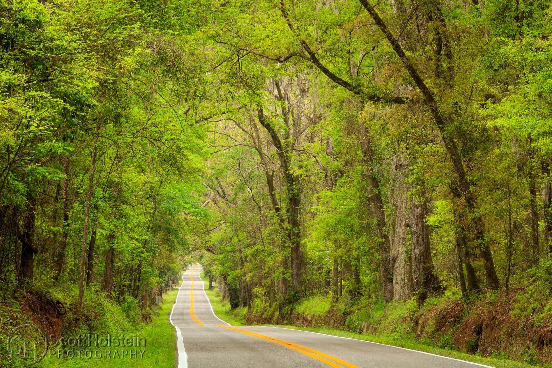 A scenic view down a lengthy stretch of Miccosukee Road, a beautiful canopy road in Tallahassee, Florida, in the early springtime.