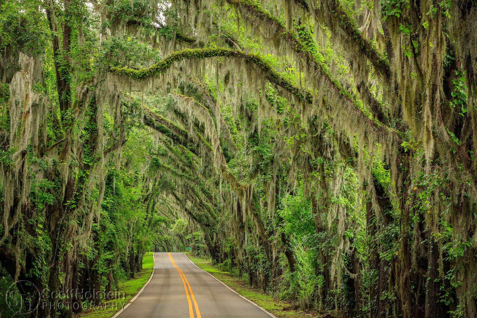 Miller Landing Road is a canopy road in Tallahassee that leads through a tunnel of trees to Miller Landing on Lake Jackson.